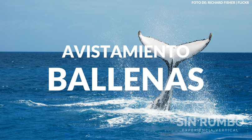 avistamiento de ballena jorobada en guatemala tour guiado